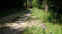 Wanderweg-4014