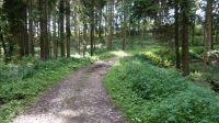 Wanderweg-4019